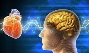 heart-brain-e1554316149824